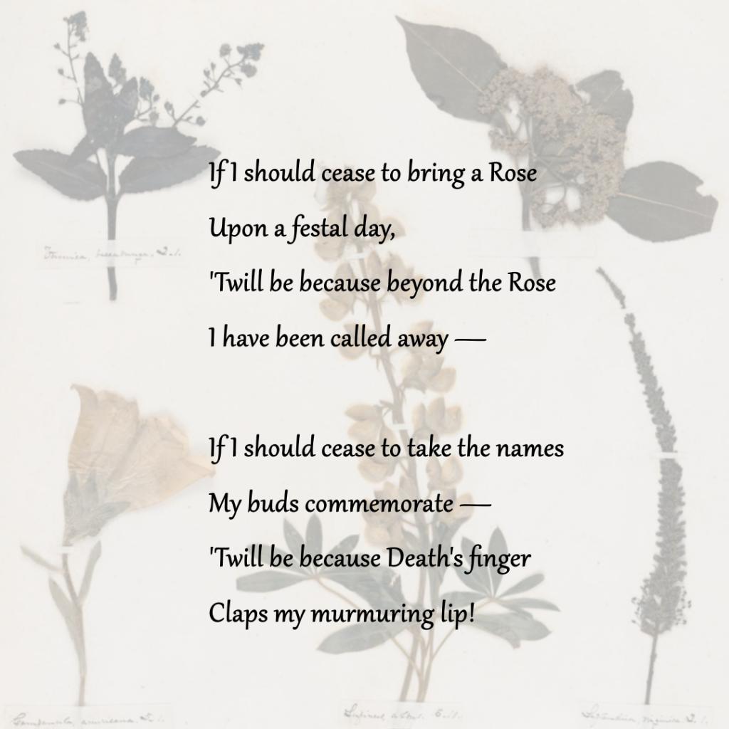 Herbarium - Vol 1 - Seq 34, 1846, Emily Dickinson